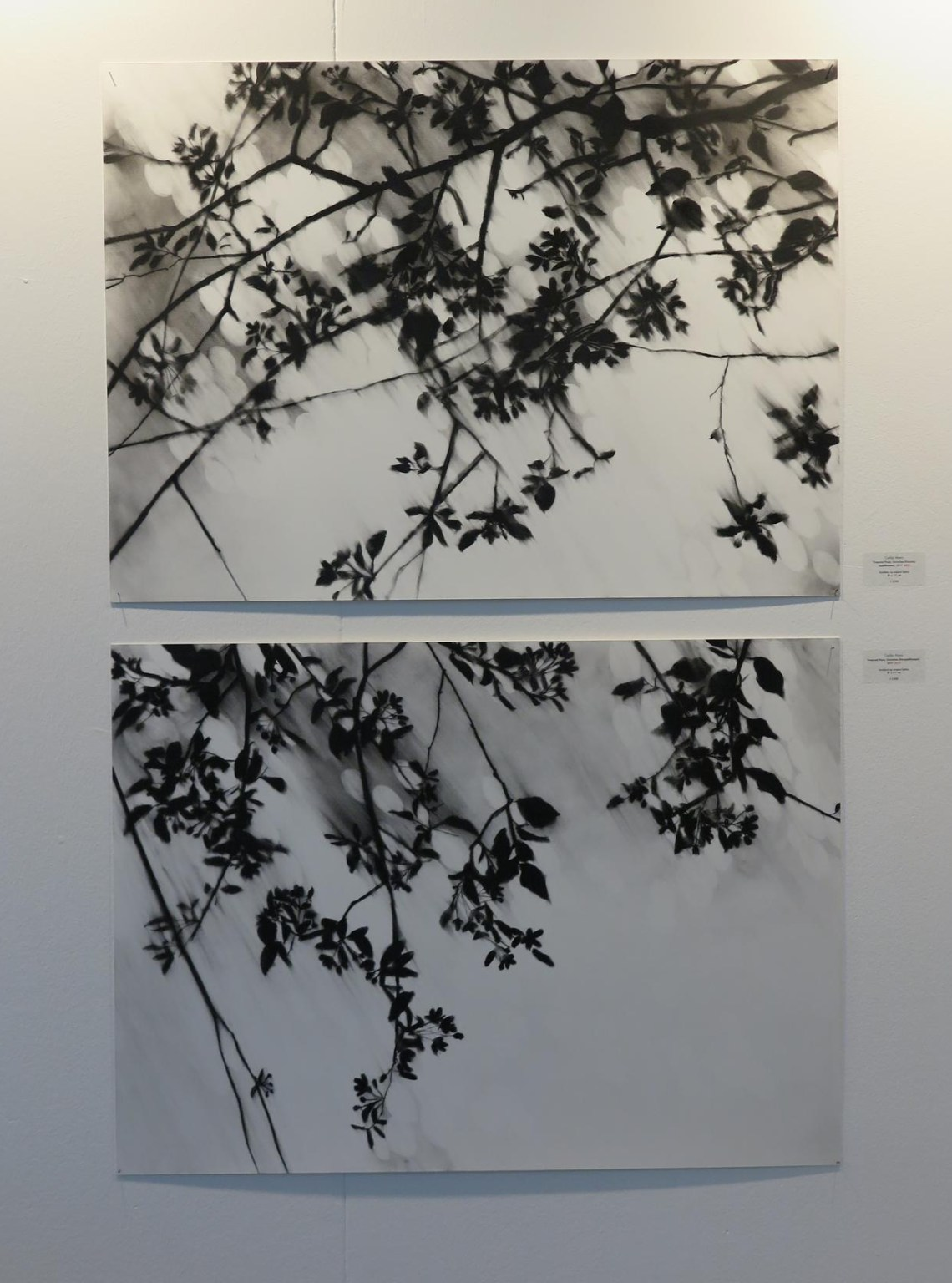 Carlijn Mens - Borzo gallery