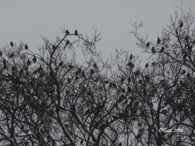 choir-of-birds-2