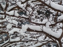 snow-on-branches