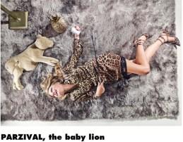 Löwe, Parzival