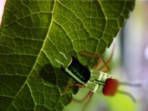 Nog dagelijks worden er nieuwe diersoorten ontdekt: The Order Electrus Videostil Floris Kaayk