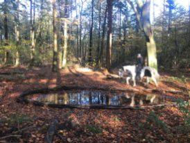 cirkel (O5 van Antoon Loomans) op het pad met paard