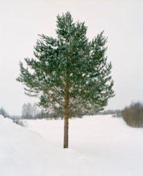 Jeroen Toirkens uit de serie BorealisB Rusland, Boreal tree # 35