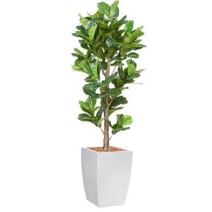 HTT - Kunstplant Ficus Lyrata in Genesis vierkant wit H230 cm - kunstplantshop.nl