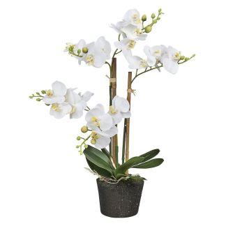 Orchidee : Phalaenopsis mini 3-tak wit 38 cm hoog - Kunstplantshop.nl