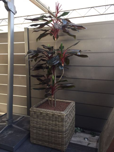 Kunstplanten in showroom - Projectbeplanting - Kunstplantshop.nl