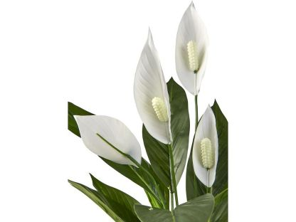 HTT Decorations - Kunstplant Spatiphyllum : Lepelplant 60 cm hoog detail - Kunstplantshop.nl