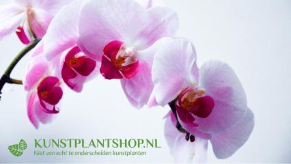 Kunstplanten voor ieder project - Projectbeplanting - Kunstplantshop.nl