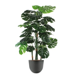 HTT - Kunstplant Monstera in Eggy antraciet H155 cm - kunstplantshop.nl