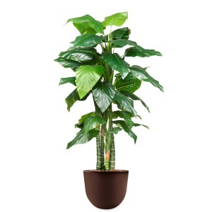 HTT - Kunstplant Philodendron in Eggy bruin H215 cm - kunstplantshop.nl