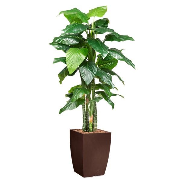 HTT - Kunstplant Philodendron in Genesis vierkant bruin H235 cm - kunstplantshop.nl