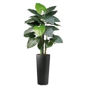 HTT - Kunstplant Philodendron in Clou rond antraciet H185 cm - kunstplantshop.nl