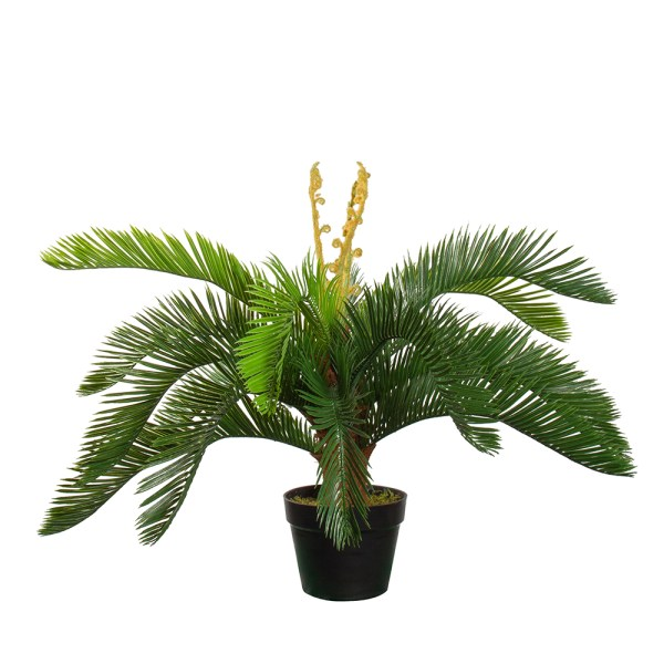 HTT Decorations - Kunstplant Palmvaren Cycas H60cm - Kunstplantshop.nl