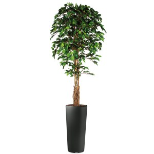 HTT - Kunstplant Ficus in Clou rond antraciet H250 cm - kunstplantshop.nl