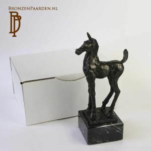 Paarden kado veulen