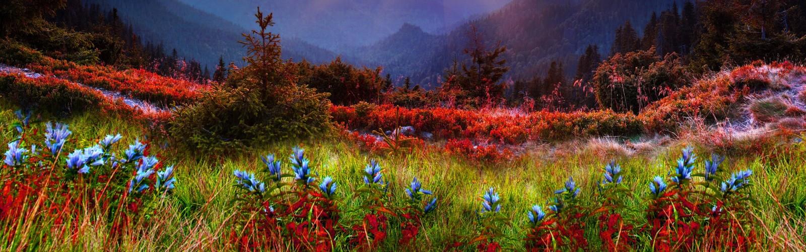 nature_3_1280x400
