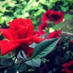 NİSAN…
