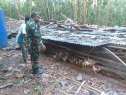 Kandang Ayam Roboh Gara – gara Gempa,  Kerugian Ratusan Juta
