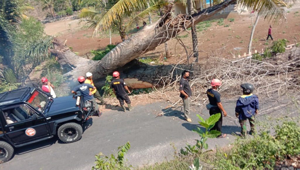Evakuasi pohon tumbang