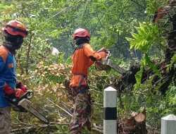 Bahayakan Pengguna Jalan,  Belasan Pohon Di Kawasan Bunder Ditebang