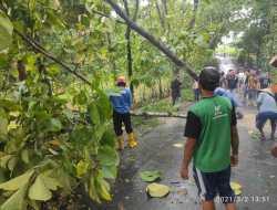 Sejumlah Pohon Tumbang Disapu Angin Kencang, Kerugian Belasan Juta
