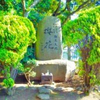 鹿嶋市にある「桜花公園」