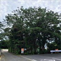 木の上の日本兵は終戦を知らず…「ニーバンガズィマール」
