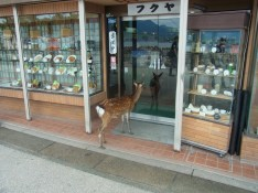 Deer waiting in front of a store