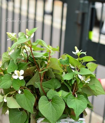blog_0124-crop