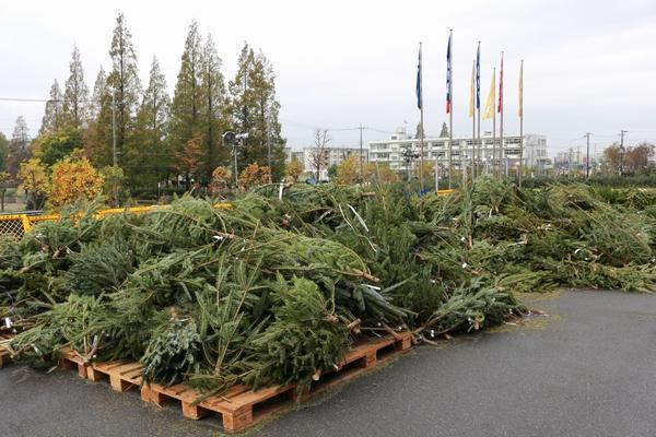 IKEA新三郷店クリスマスツリーもみの木