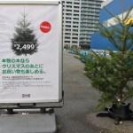 イケアクリスマスツリー2015