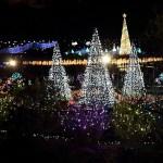 あしかがフラワーパークイルミネーションへ年末クリスマス時期に行った時の所要時間と混雑は?
