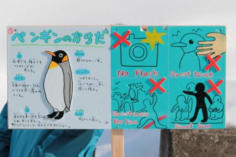 ペンギンの体注意事項