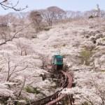 船岡城址公園の桜の見頃や開花状況や見所スロープカーの時間と料金は?