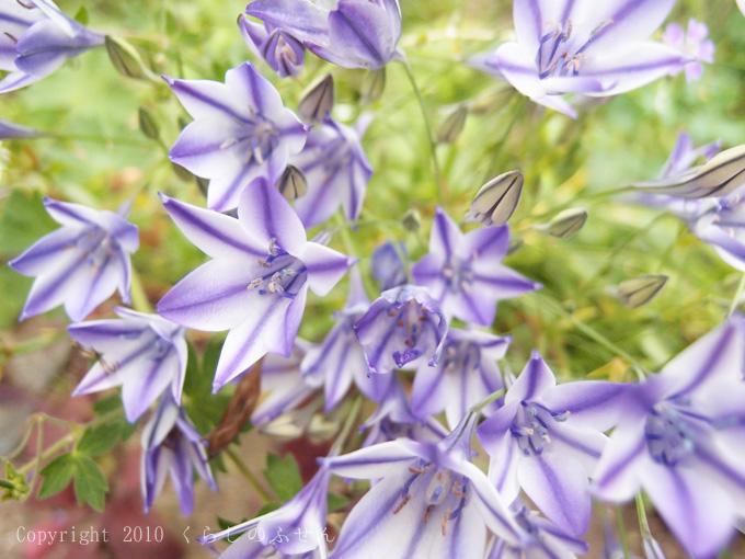 涼やかな夏の花
