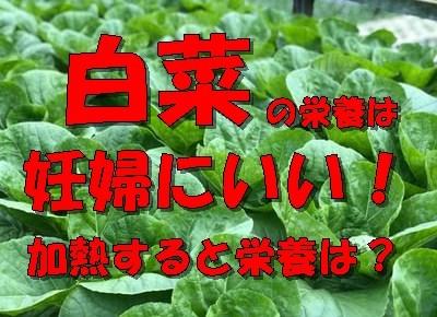 【2.18更新】白菜の栄養価は妊婦に必要!加熱したら栄養価はどうなる?