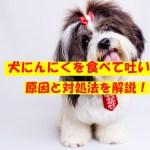 犬がにんにく食べたら嘔吐する理由!加熱すると大丈夫?対処法も!