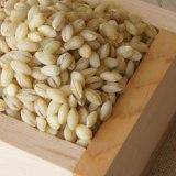 もち麦と押し麦の違いは?栄養や効能を比較!ダイエット効果あるのは?
