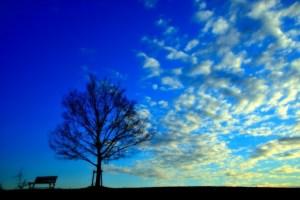 初冬 うろこ雲
