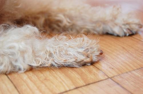 エコ 長い カーテン 廊下 冷気 遮断 安い おすすめ 犬 猫 出入り ドア
