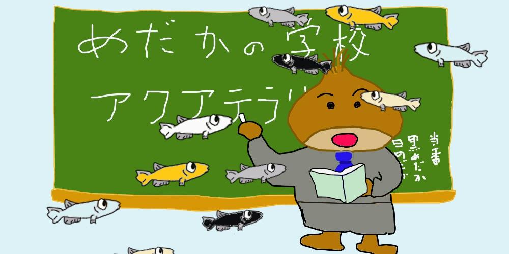 初心者 めだか 選び方 水合わせ 育て方 稚魚 成魚 めだかの学校