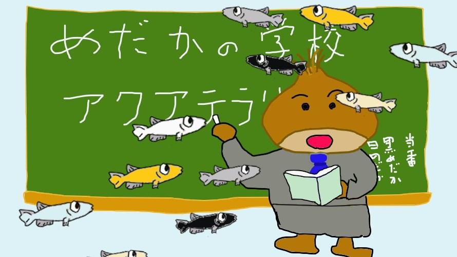 いよいよ開校\(^o^)/ めだかの学校アクアテラリウム水槽