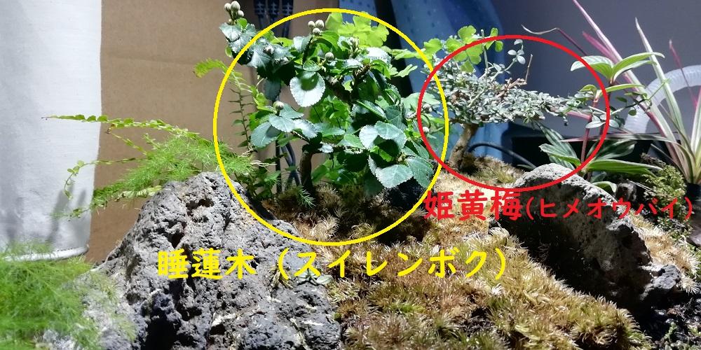 スイレンボクと姫黄梅の植えている位置