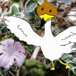 水槽引越したけど今年も咲いた白丁花の花