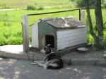 Placówki pilnują psy na uwięzi, co sugeruje, iż dzieci rzadko wychodzą na zewnątrz