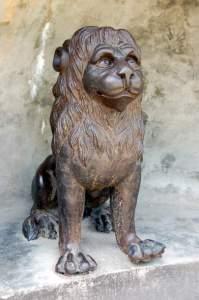 Przesympatyczny lew chwilowo nie pozuje Fot. archiwum