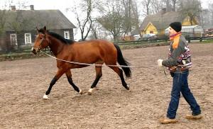 Codziennie konie muszą trenować minimum godzinę-półtorej Fot. Marian Paluszkiewicz