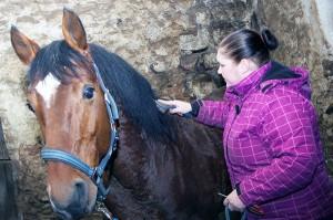 Konie są bardzo delikatne i ufne Fot. Marian Paluszkiewicz