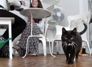 Jeden z najbardziej rozpowszechnionych na świecie przesądów dotyczy czarnego kota, który sam nawet nie podejrzewa, że komuś może przynosić pecha... Fot. Marian Paluszkiewicz
