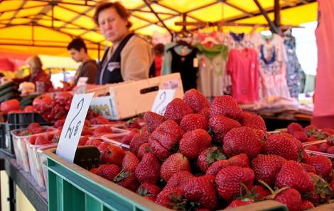 Słodki zapach, kuszący wygląd, wspaniały smak oraz gwarancja zdrowia – sięgać po truskawki naprawdę warto Fot. Marian Paluszkiewicz